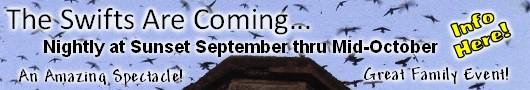 The Swifts are coming! Watch this amazing spectacle as tens-of-thousands of Vaux's Swifts swirl overhead at sunset before descending within minutes into the Chapman School chimney at NW 26th & Raleigh. Now thru September. Peak nights Sept 5 & 17!  Info Here!