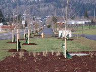 Gresham's Arbor Day Celebration 2011; Gradin Arboretum: Apr 9, 2011 9AM-12PM. Info here!