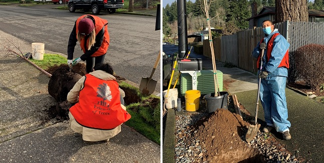'Green Gresham, Healthy Gresham' Grant Project Adding Street Trees to West Gresham Neighborhoods. Planting from Dec 2020 to end of February 2021. Details here!
