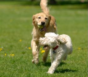 Dog lovers wanted, Gresham Parks Commission to consider off-leash dog park: June 10, 2010 6:30PM. Info here!