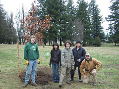 New Scarlet Oaks added to Columbia View Park in Gresham Oregon, Jan 9, 2010 by Friends of Trees volunteers. Info here!