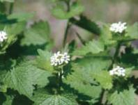 Help Gresham fight the 'Invasive Invasion'; Invasive Weed Identification Class: Nov 15, 2011 7PM. Info here!