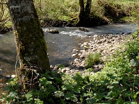 Volunteers Wanted, Johnson Creek 15th annual Watershed Wide restoration event: Mar 2, 2013 9AM-12PM. Info here!