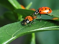 Beneficial Insects Workshop: Thu, Mar 21, 2019 6PM-8:30PM. Info here!