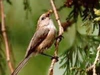 Audubon Society Saturday Bird Walks at Nadaka Nature Park: Sat Aug 08, 2015 8AM-9AM. Info here!