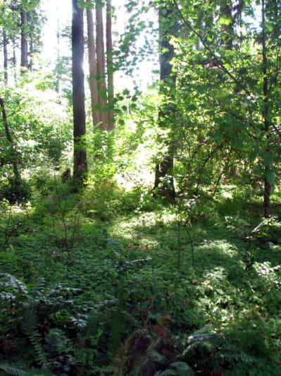 Saturday Cleanup At Nadaka Nature Park: Sat Aug 01, 2015 9AM-Noon. Remove invasive plants species such as English ivy, weed and water the community garden and the front two acres of the park. Families and groups are welcome to attend! Meet at picnic shelter 176th & NE Glisan. Info here!
