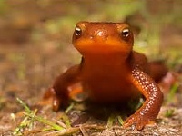 Volunteer Workshop, Amphibians and Reptiles Class: Sat Mar 26, 2016 9AM-11:30AM. Info here!