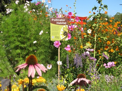 Volunteer! Vance Park Pollinator Garden Work Party: Sat, Mar 18, 2017 10AM-2PM. . Info here!