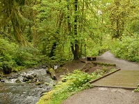 City of Gresham Senior Healthy Hikers, Lower Macleay Park Hike: Wed, Dec 12, 2018 9AM-5PM. Let's Go Walking!. Info here!