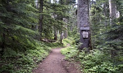 Senior Healthy Hikers, Top Spur Hike: Thu, Aug 06, 2020 10AM-5PM. Let's Go Walking!. Info here!