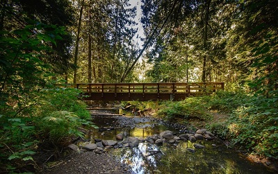 City of Gresham Senior Healthy Hikers, Tickle Creek Trail Hike: Tue, Nov 27, 2018 10AM-5PM. Let's Go Walking! Info here!